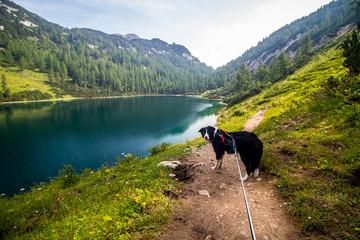 Dog on a hike by lake Steirersee in Austrian Alps near Tauplitzalm, Bad Mitterndorf village