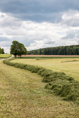 Big meadow with cut grass in the middle of the german countryside