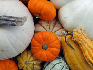 Pumpkins & Gourds Closeup - 432