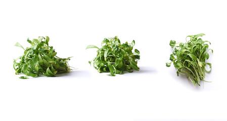 coriander micro green