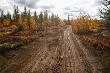 Scattered road in the forest-tundra. Autumn in the tundra. Autumn forest. The leaves of the grass and the trees turned yellow and turned red. Autumn scenery.