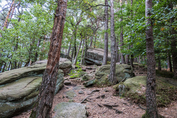 Big rocks in the middle of the green forest