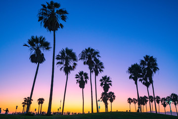 Venice beach palm trees at sunset in Los Angeles in California USA
