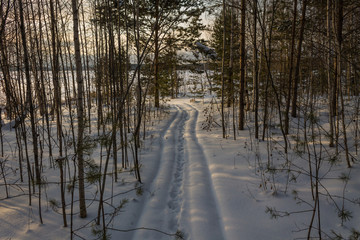 Ski tracks in the woods. A path in a dense snowy forest