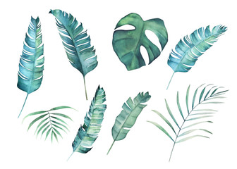 Watercolor leaves set. Hand drawn illustration.