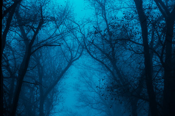 Obraz Photo of a mystical fantasy forest, silhouettes of trunks and branches, fog and twilight blue sky - fototapety do salonu