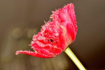 Obraz Piękny czerwony kwiat. - fototapety do salonu