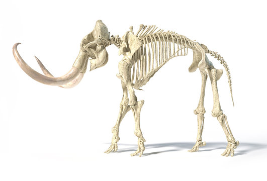Woolly mammoth skeleton, realistic 3d illustration, side view.