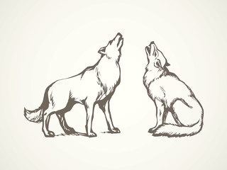 Wolf. Vector drawing Wall mural