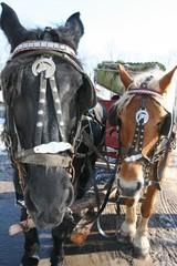 Kutsche mit zwei Pferden, Rappe und Haflinger