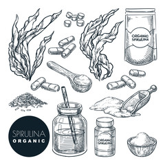 Spirulina seaweeds set, sketch vector illustration. Kelp leaves, powder and pills. Hand drawn superfood design elements