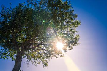Sonnenschein am Baum
