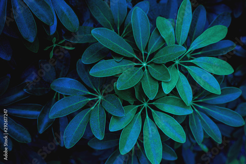 Wall mural abstract dark green leaf texture, nature background