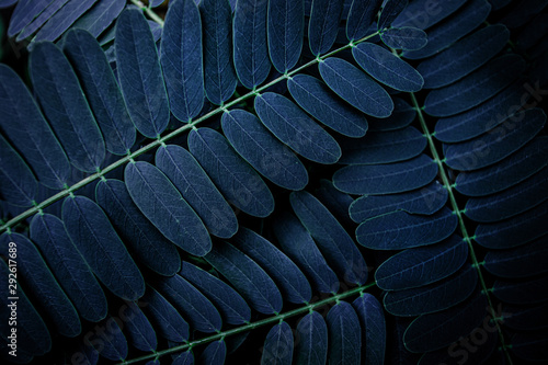Wall mural tropical leaf, abstract green leaf texture, nature background
