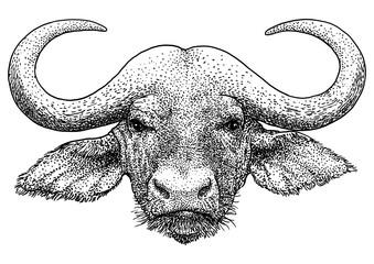 African portrait buffalo illustration, drawing, engraving, ink, line art, vector