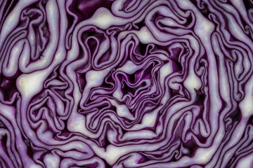 Fototapeta Background of the blue cabbage in the cut. Close up, top view. Texture raw purple cabbage obraz
