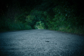 The road is shrouded in a tunnel of greenery. Low angle shot of an asphalt road surrounded by the plants grass and nature. Dark stylized shot. Wall mural