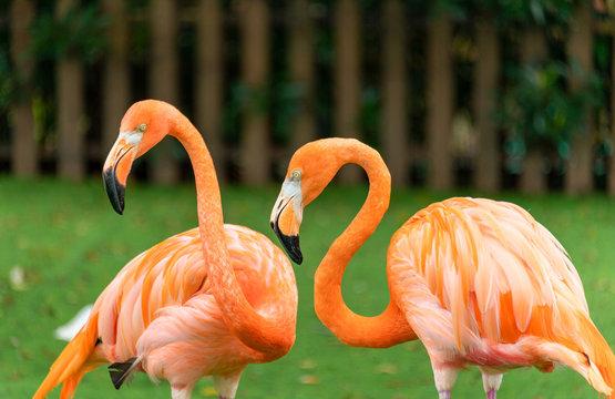 Flamingos at Shanghai Safari Park