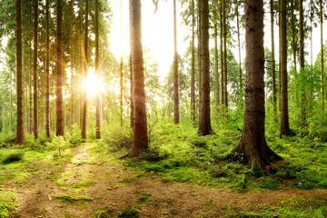 Fototapete - Wunderschöner Wald mit einem Weg und strahlender Sonne