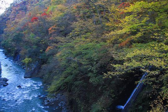 吾妻渓谷・吾妻川と白糸の滝(紅葉)