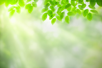 Green leaf on blurred greenery background. Beautiful leaf texture in nature. Natural background. close-up of macro with free space for text.