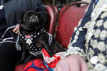 A pug dog sits with a pearly jacket next to Pearly Kings and Queens before the Harvest Festival service at the Guildhall in London