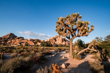 Joshua Tree National Park is an American national park in California, east of Los Angeles. The park is named for the Joshua trees native to the Mojave Desert. Tourism, travel USA, beautiful landscape