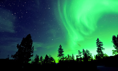 Foto auf Leinwand Nordlicht Northern lights aurora borealis over trees