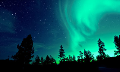 Poster de jardin Vert corail Northern lights aurora borealis over trees