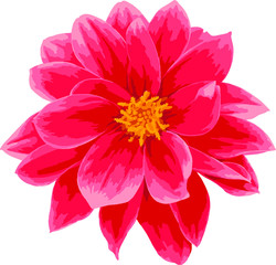 Сloseup pink Dahlia flower. Vector illustration isolated on white background.