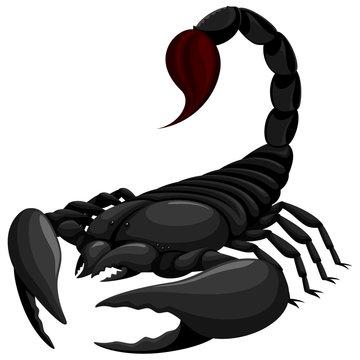 Vector illustration of a black scorpion.