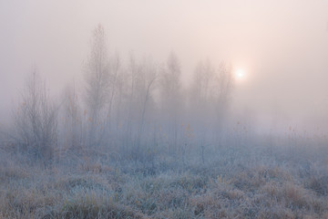 Foto op Plexiglas Zalm Beautiful autumn misty sunrise landscape. November foggy morning and hoary frost at scenic high grass meadow and copse.