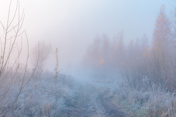 Papiers peints Forets Beautiful autumn misty sunrise landscape. November foggy morning and hoary frost at scenic rural road at high grass copse.