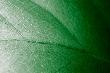 Fototapete - Abstract organic texture of leaf.