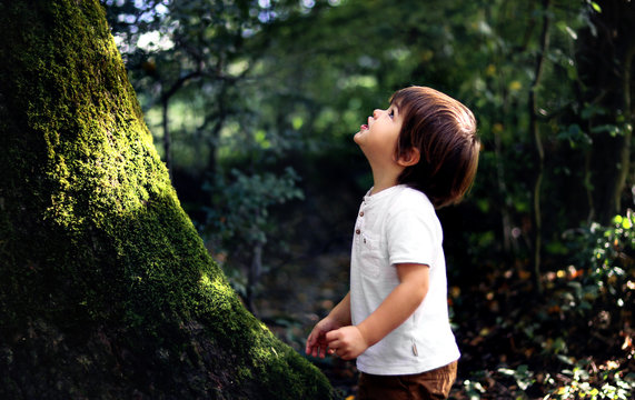 Cute little curious boy standing in deep dark forest at old tree covered with green moss looking up waiting for magic. Inquisitive childhood.