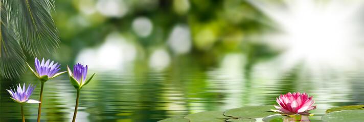 Garden Poster Lotus flower image of lotus on the water closeup