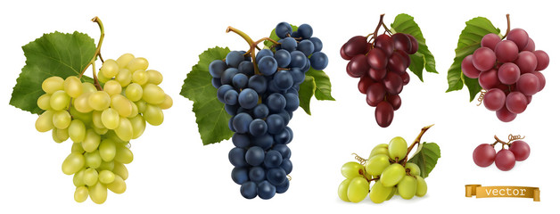Wine grapes, table grapes. Fresh fruit, 3d realistic vector set
