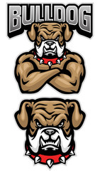 fierce bulldog mascot crossed arm pose