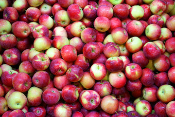 Wall Mural - Fresh picked red apples in the harvest season