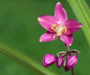 The most beautiful pink orchid flower I've ever seen in a flower garden.