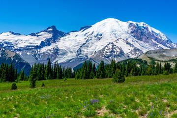 Landscape Mountain Picture: Medows view Mount Rainier