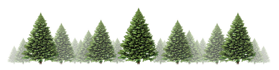 Pine Tree Horizontal Border