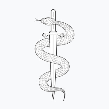 Snake with dagger. Vector illustration isolated on white background. Line design, editable stokes
