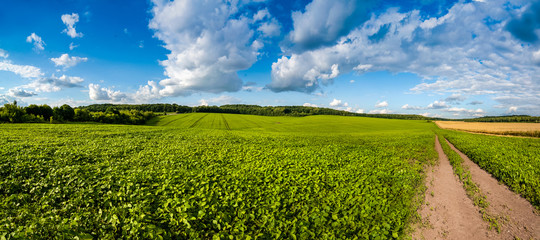 fresh green Soybean field hills, waves and dirt road with beautiful sky Fototapete