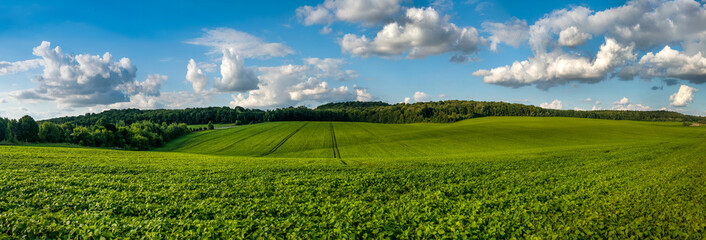 In de dag Cultuur fresh green Soybean field hills, waves with beautiful sky