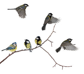 isolated six tits on tree branch