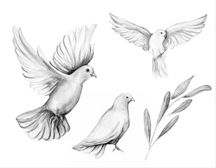 Peace bird, dove, art, water color drawing