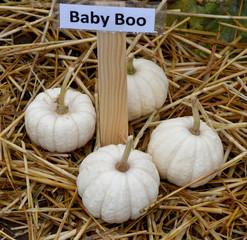 Baby Boo, Zierkuerbis