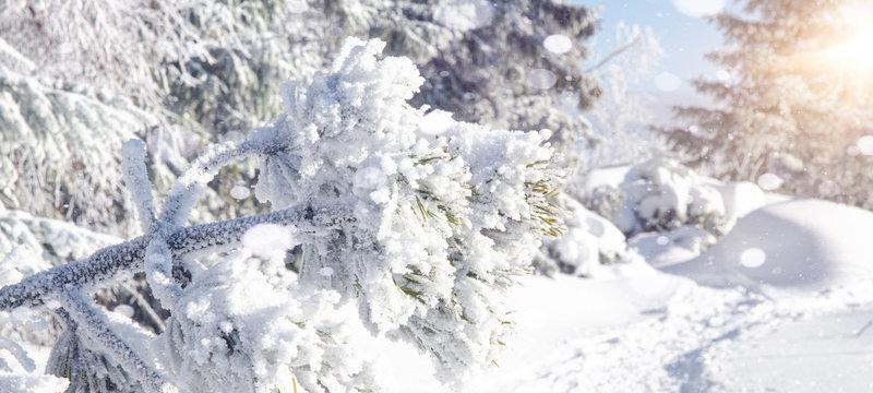 winter wonderland - winter landscape with snowflakes, blue sky background