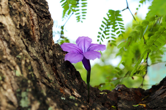 Flower All Alone in The Tree